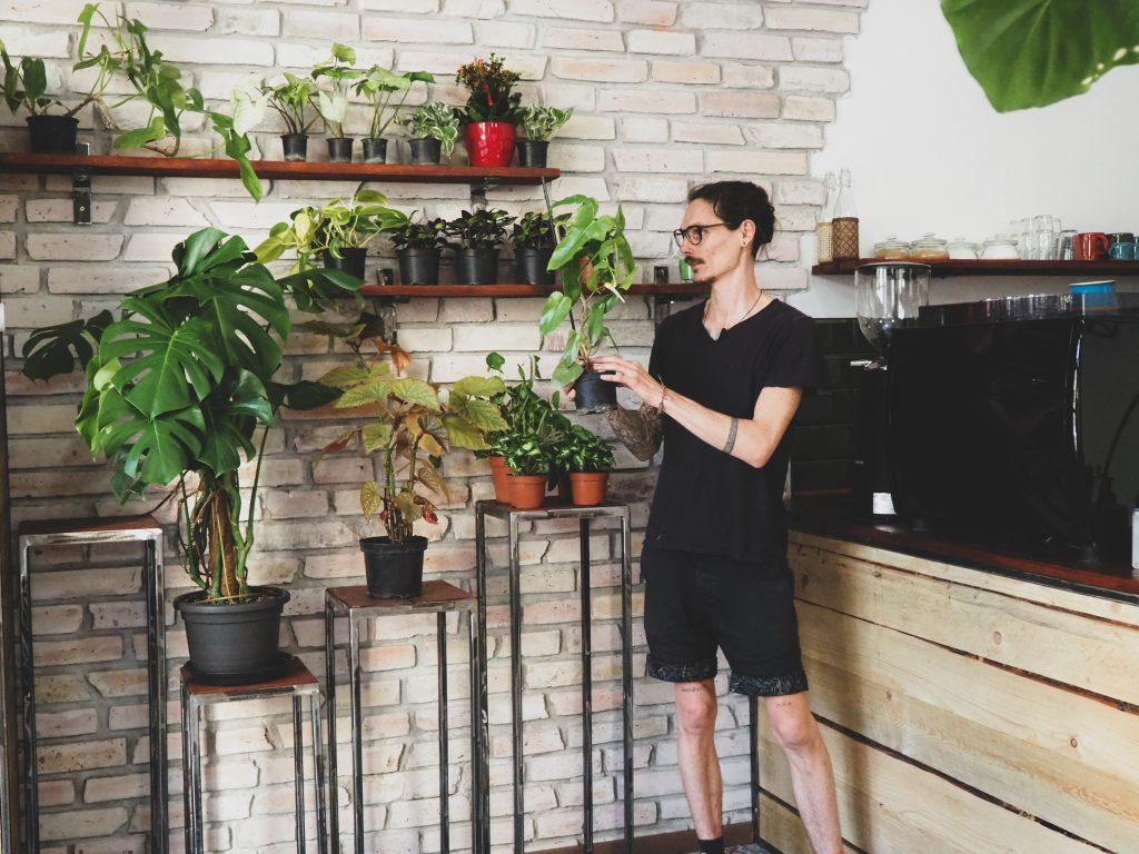 Pesti Palánta vegán bisztró növénybolt Budapest