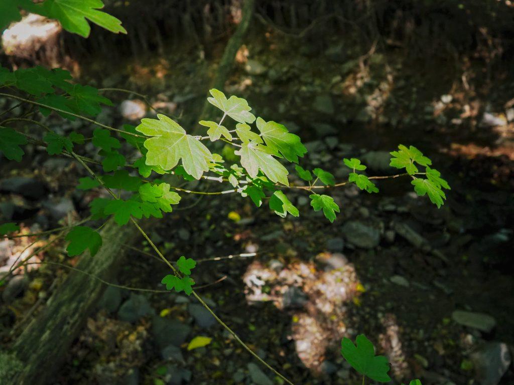 erdő fények