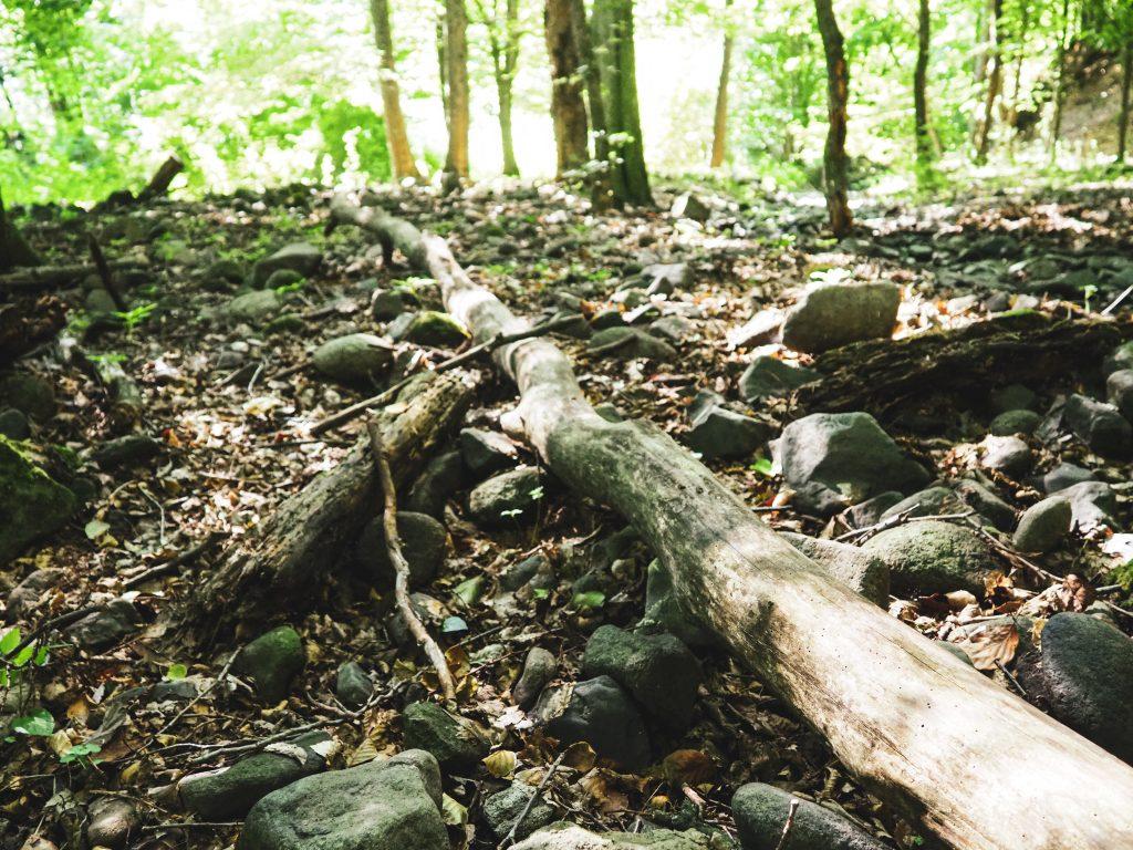 Erdőmerülés kirándulás