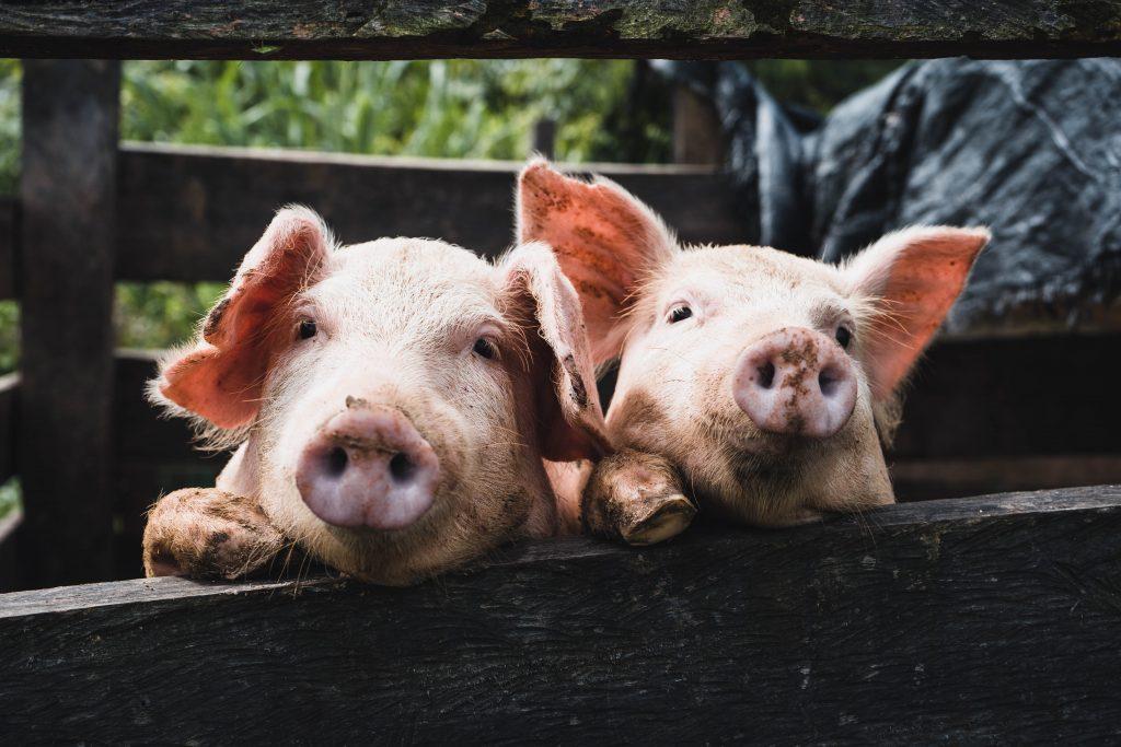 Zöld filmajánló II. –  Állatok a tányérunkon: 7 film a veganizmusról